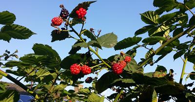 oogsten_in_de_tuin3